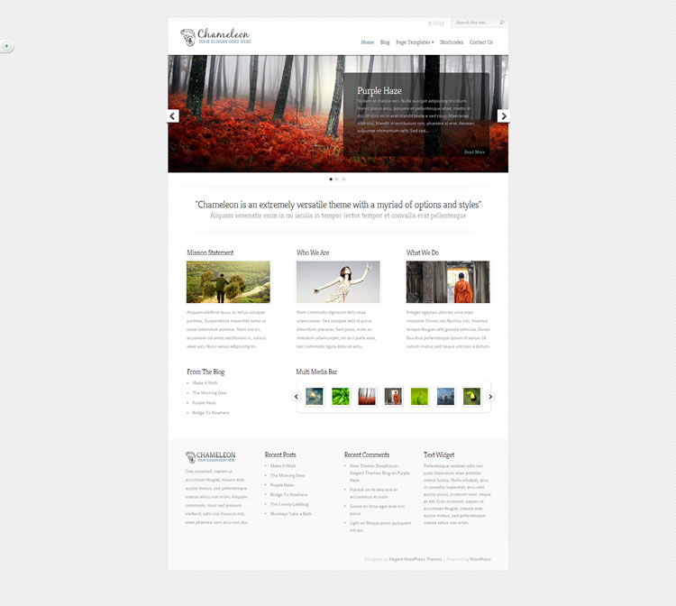 Elegant Themes WordPress theme: Chameleon