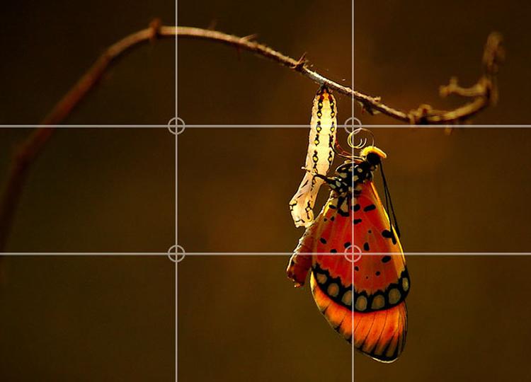 Image by Prem Anandh.